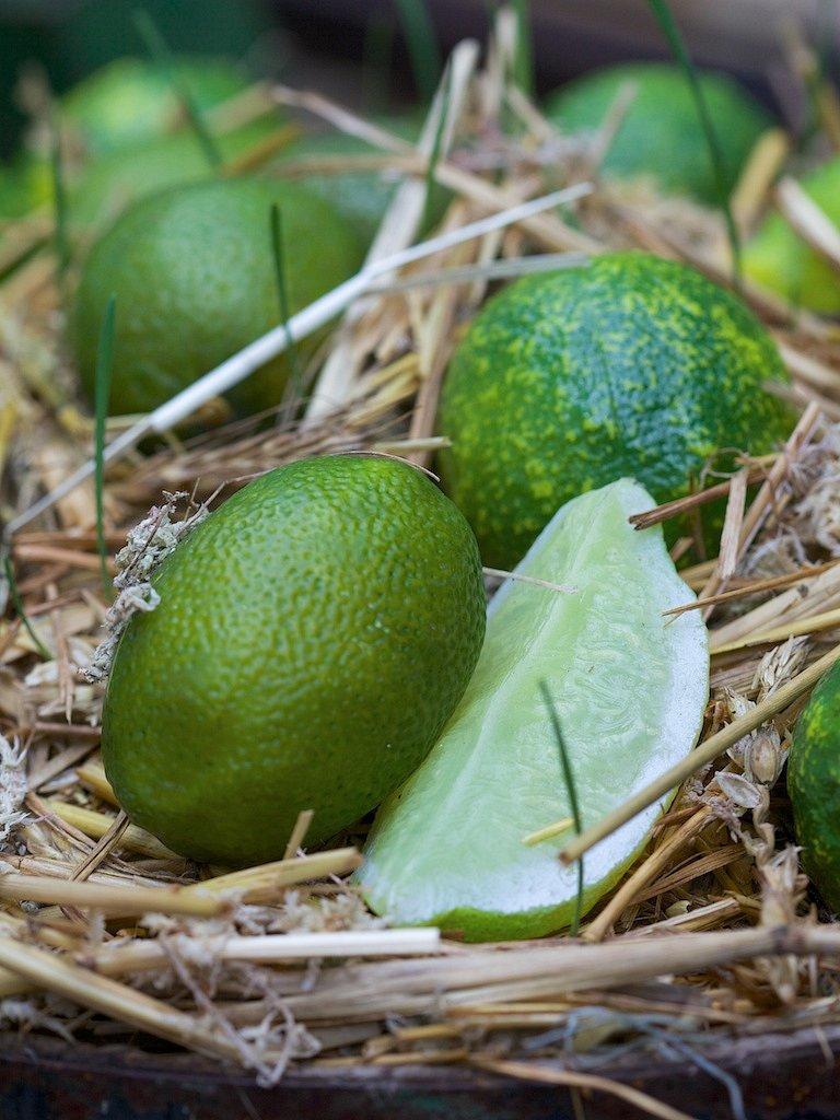 Limes-2.jpg